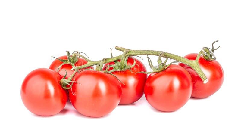 r?d tomat mogna gr?nsaker saftig tomat V?xande tomater En maträtt för vegetarian K?lla av vitaminer arkivbild