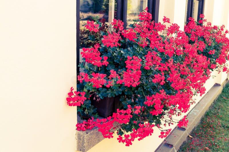r?da blommor i askar p? f?nsterbr?dan royaltyfria bilder