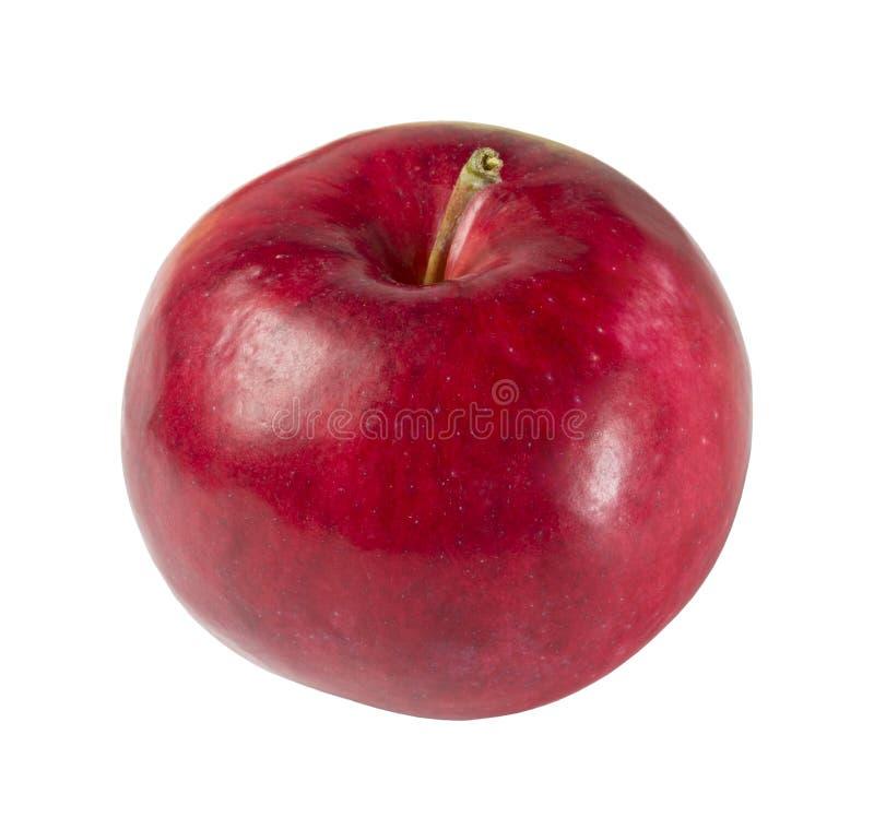 R?da nya Apple p? vit bakgrund royaltyfria bilder