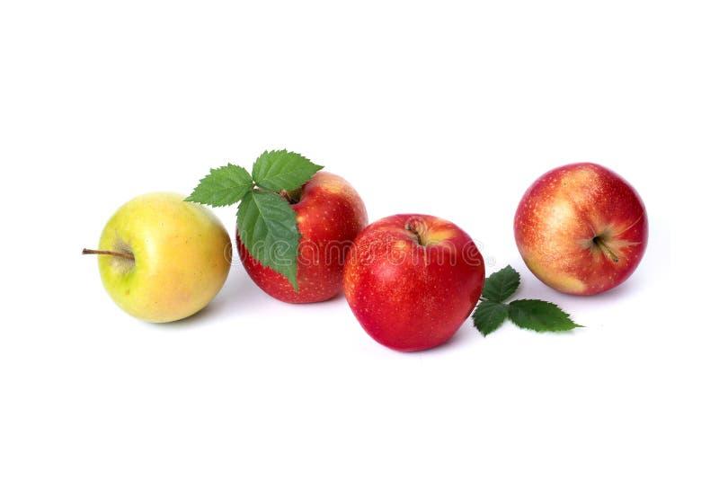 R?da och gr?na ?pplen p? en vitbakgrund Gröna och röda saftiga äpplen med gröna sidor på en isolerad bakgrund En grupp av revan fotografering för bildbyråer