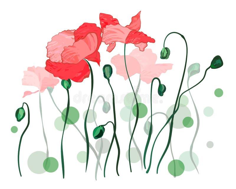 R?da Poppy Flowers Over White royaltyfri illustrationer