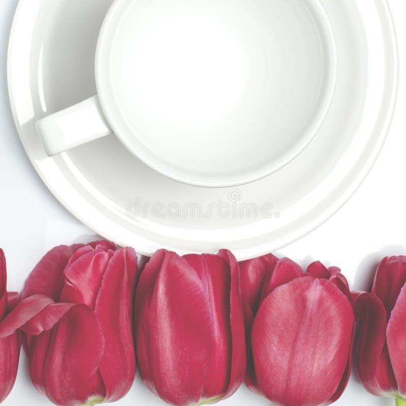 R?da tulpan ligger p? en vit bakgrund n?ra koppen f?r vitt kaffe, som st?r p? ett vitt tefat royaltyfria bilder