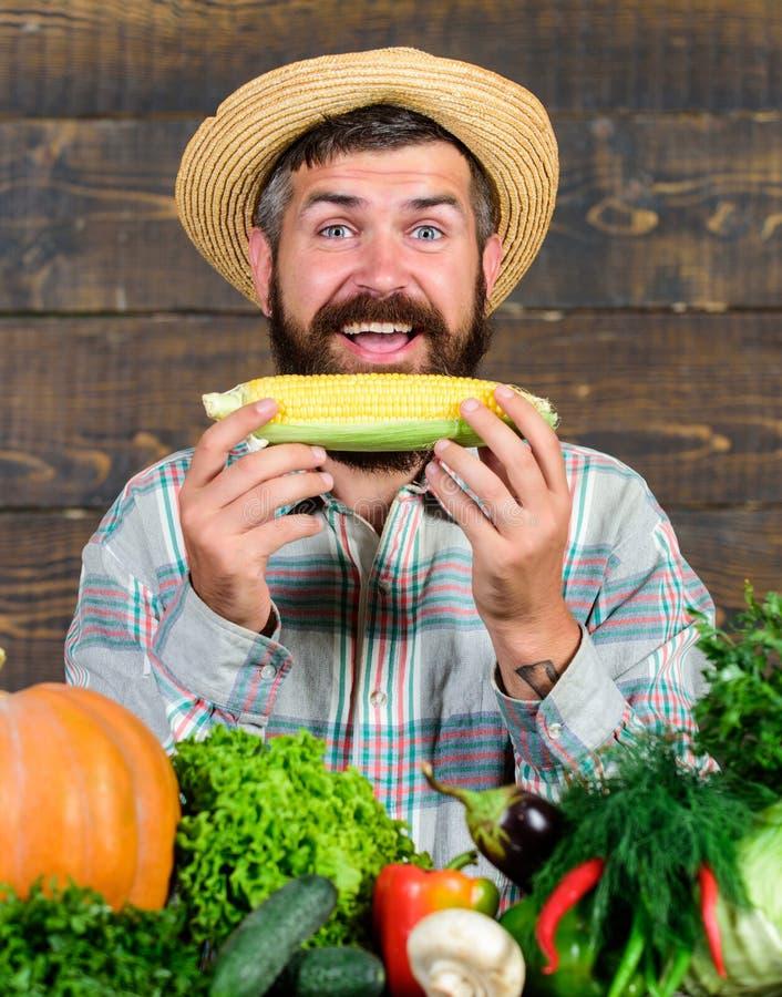 r Homegrown οργανικά οφέλη συγκομιδών Λαβή της Farmer corncob ή ξύλινο υπόβαθρο αραβόσιτου Παρουσίαση της Farmer στοκ εικόνα