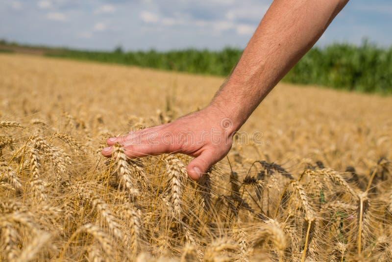 Download Ręka i banatka zdjęcie stock. Obraz złożonej z farm, fielder - 57662792