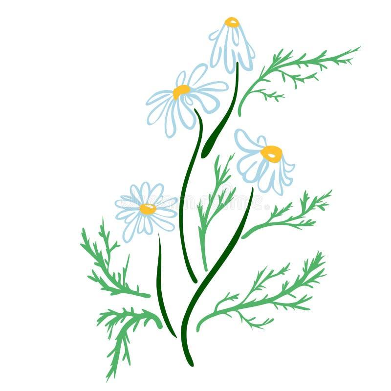 R?ka rysuj?cy rumianku kwiatu nakre?lenia rocznika styl poj?cia projekta restauraci szablon r?wnie? zwr?ci? corel ilustracji wekt royalty ilustracja
