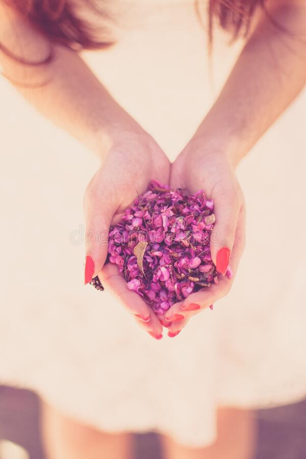 Ręki Trzyma Kwiatów Płatki Bezpłatna Domena Publiczna Cc0 Obraz