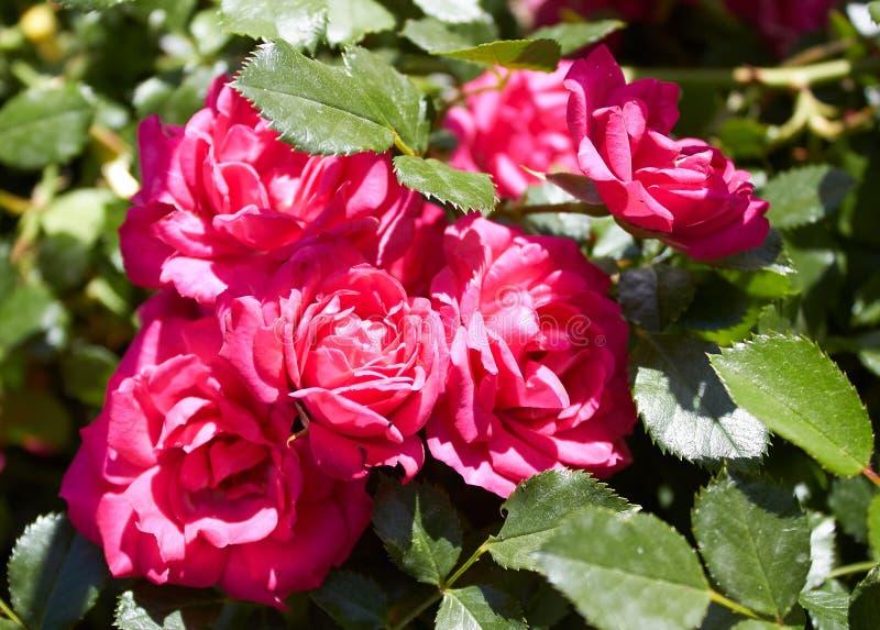 R kwiaty przy chałupą i wydziela zapachy obraz royalty free