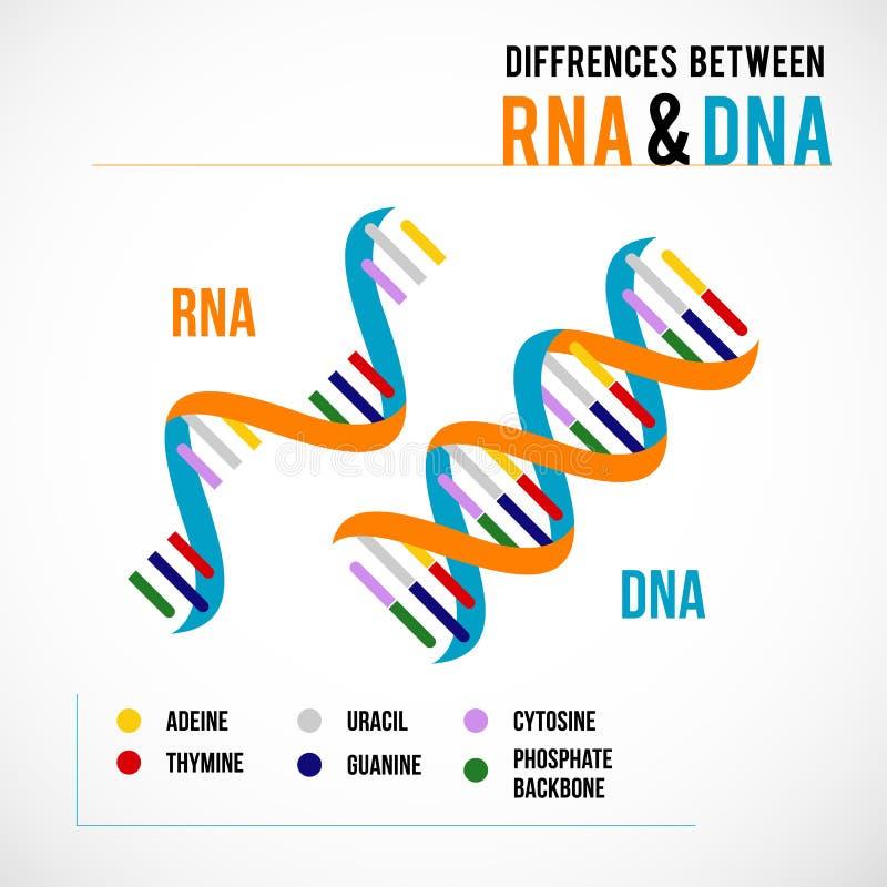 R??nicy mi?dzy DNA i RNA ilustracji