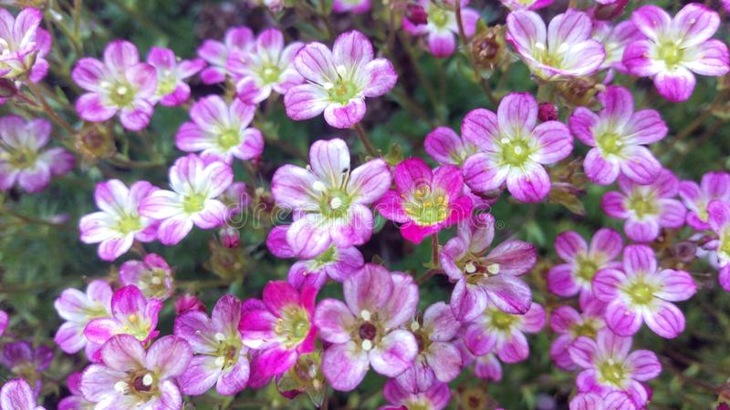 R??owa tunika kwiatu grupa Makro- obraz royalty free