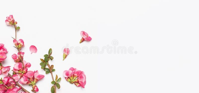 R??owa wiosna kwitnie na ?wietle - szara t?o odg?rnego widoku kopii przestrze? Różowe kwiecenie gałąź Lato bukieta styl ?ycia Wio zdjęcia royalty free