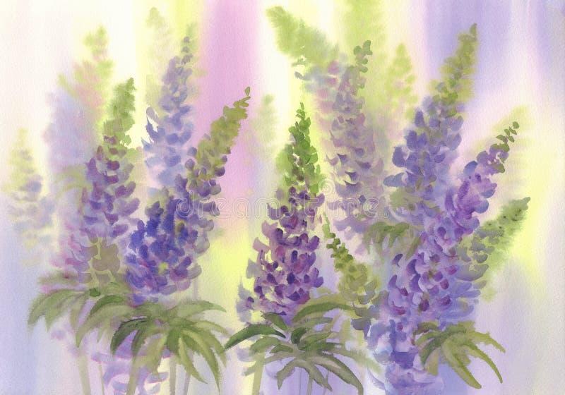R??owy i fio?kowy lupine kwiat akwareli t?o zdjęcia royalty free