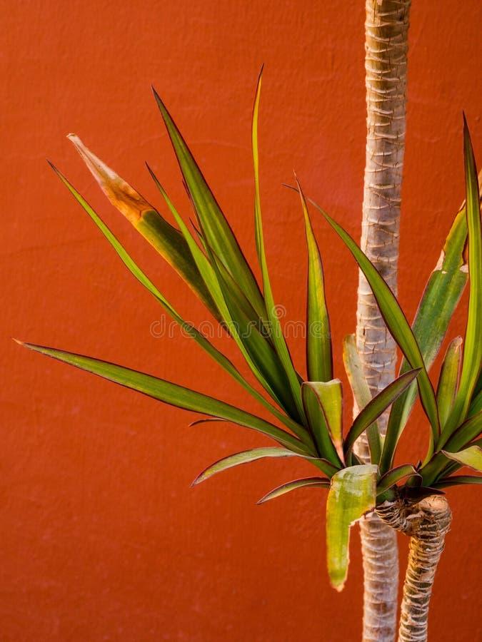 r Primo piano delle foglii di palma immagine stock libera da diritti