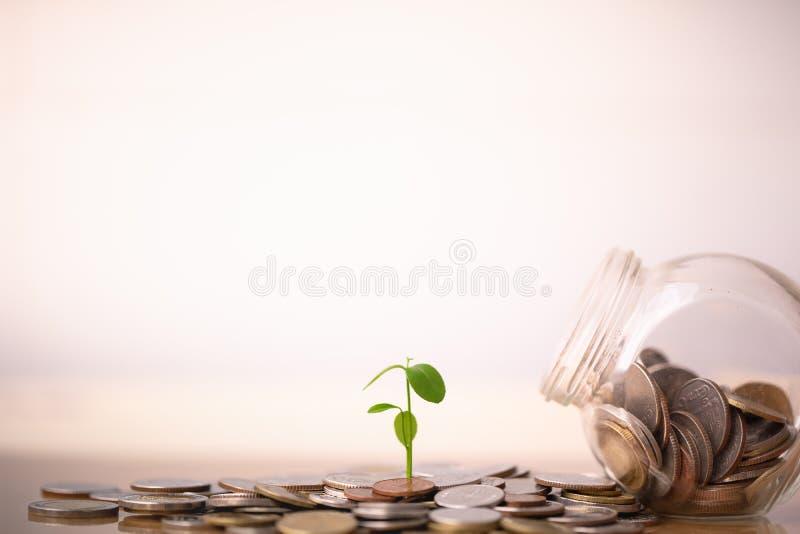 R rośliny na monetach brogować w pojęciu oszczędzania i pieniądze dorośnięcie obraz royalty free