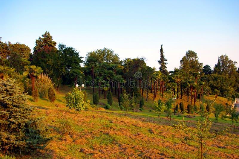 R?ssia Sochi Arboreto de Sochi Fundado em 1892 por S Khudekov foto de stock royalty free