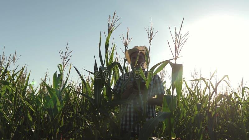 r un agronome d'agriculteur travaillant dans le domaine, inspectent les ?pis de ma?s de maturation Homme d'affaires photo stock