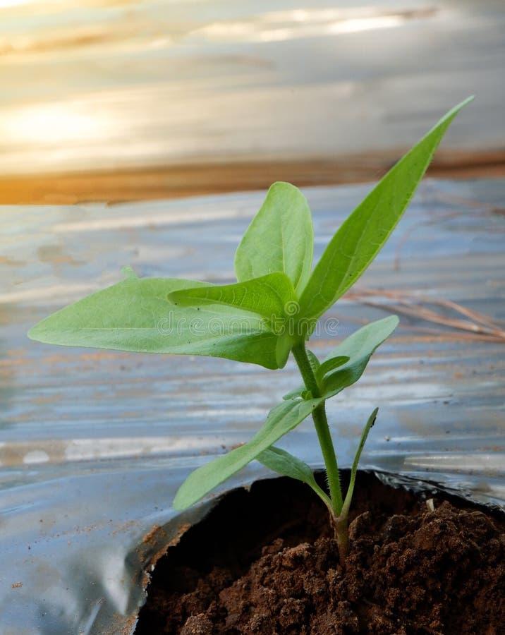 R up rośliny zdjęcie royalty free