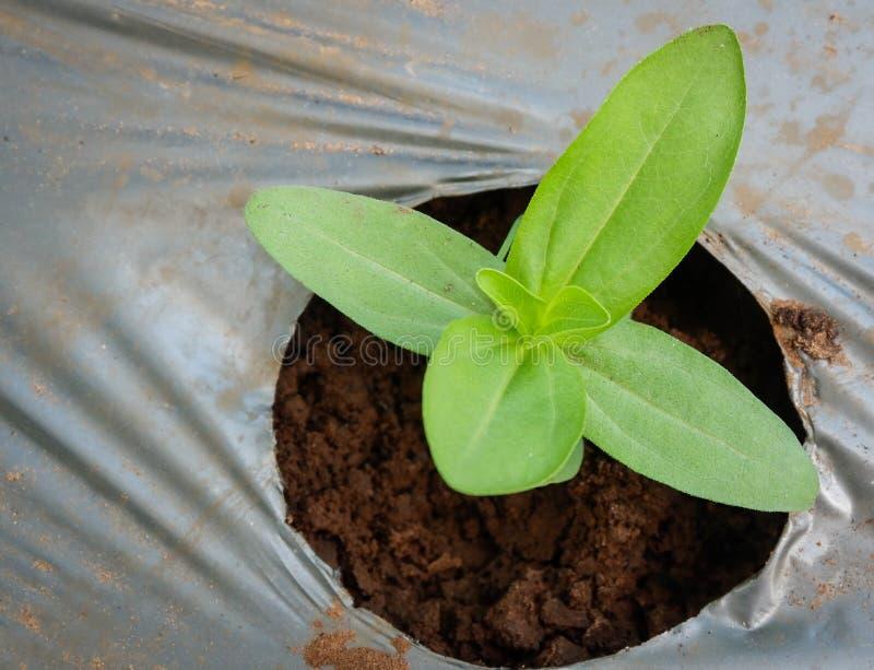 R up rośliny zdjęcie stock