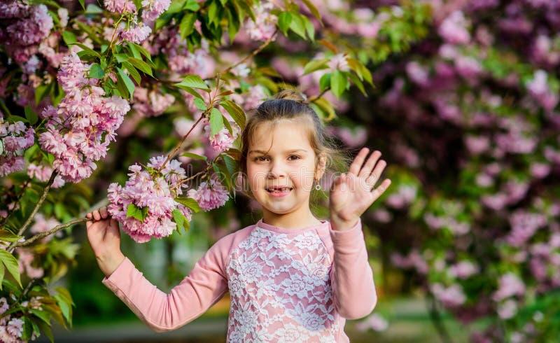 r Vacances de source heureuses Appréciez l'odeur du jour ensoleillé de fleur tendre Concept de fleur de Sakura Stationnement photo libre de droits