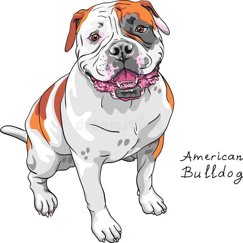 Raça americana do buldogue do cão do esboço do vetor ilustração royalty free