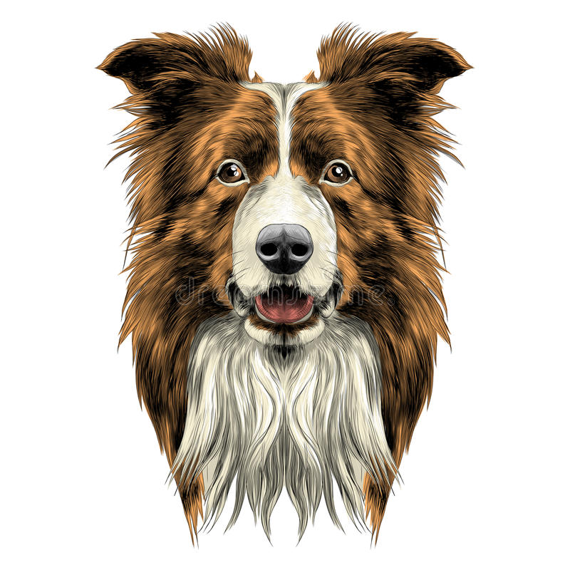 Raça border collie da cabeça de cão ilustração stock
