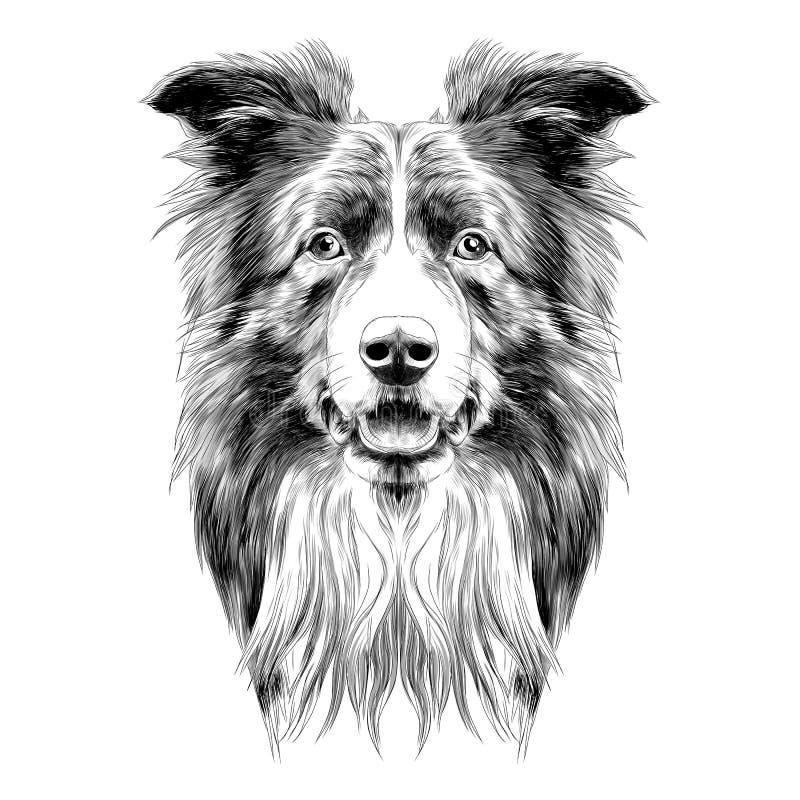 Raça border collie da cabeça de cão ilustração royalty free