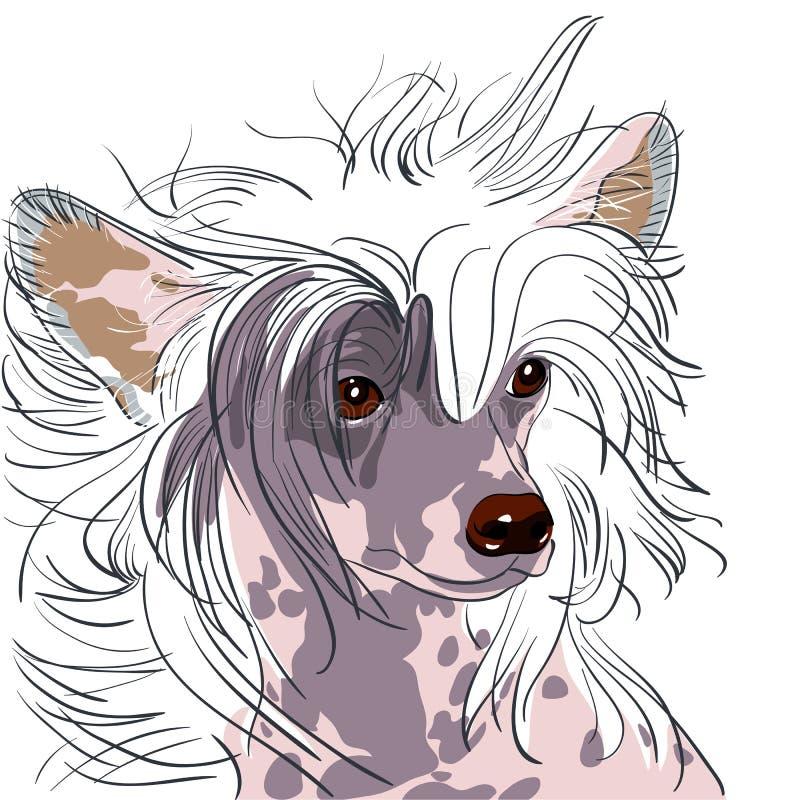 Raça com crista chinesa do cão do vetor ilustração stock