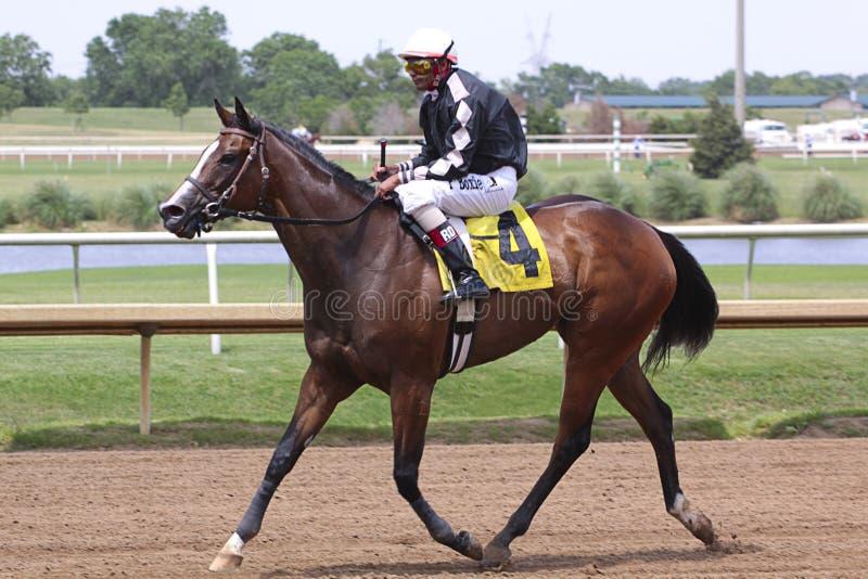 Raça de cavalo. foto de stock royalty free