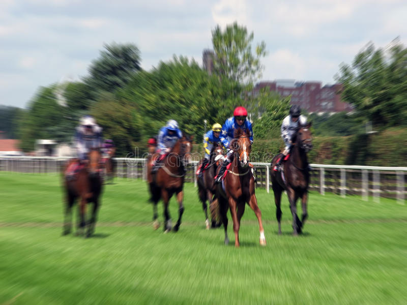 Raça de cavalo de York imagem de stock royalty free