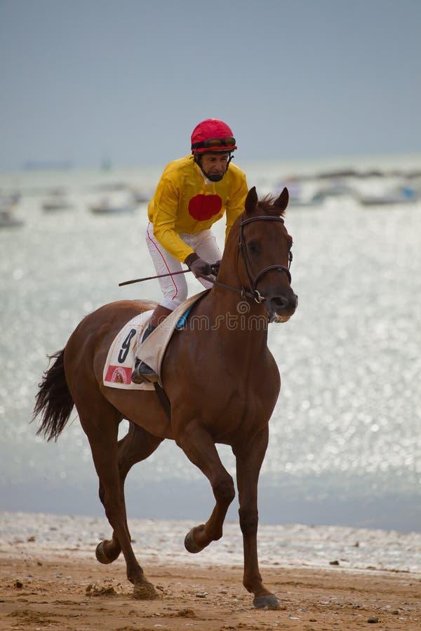Raça de cavalo em Sanlucar de Barrameda, Spain imagens de stock royalty free