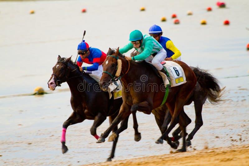 Raça de cavalo em Sanlucar de Barrameda, Spain foto de stock royalty free