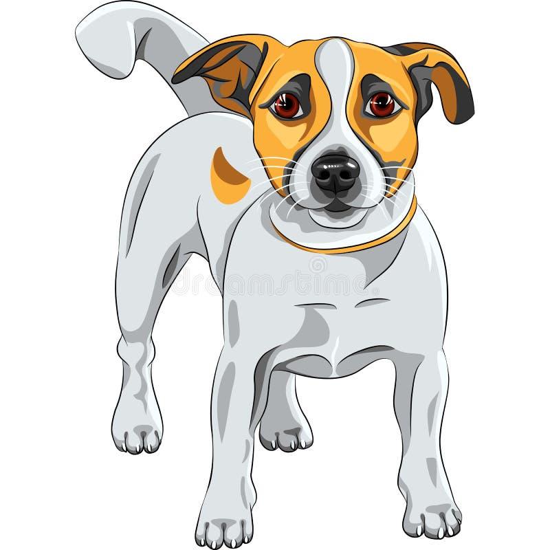 Raça de Jack Russell Terrier do cão do esboço ilustração stock