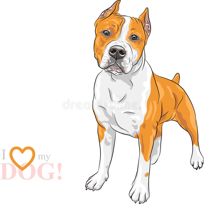 Raça de Staffordshire americano Terrier do cão do esboço do vetor ilustração stock