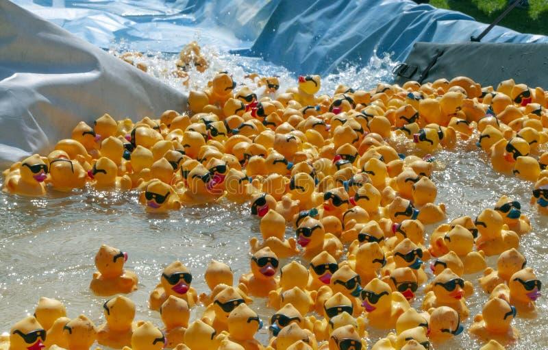 A raça Ducky de borracha começa com as centenas que flutuam abaixo de uma rampa sintética foto de stock royalty free