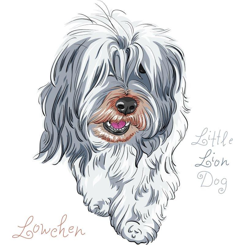 Raça Lowchen do cão do vetor ilustração stock
