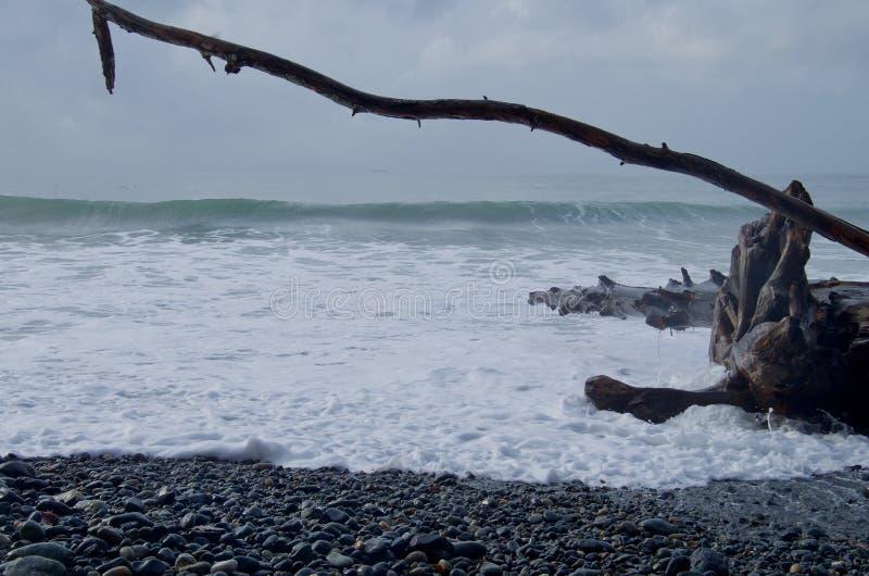 Raças de formação de espuma da onda acima de Pebble Beach para tragar um log da madeira lançada à costa imagem de stock