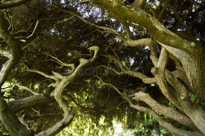 raíces imagen de archivo libre de regalías