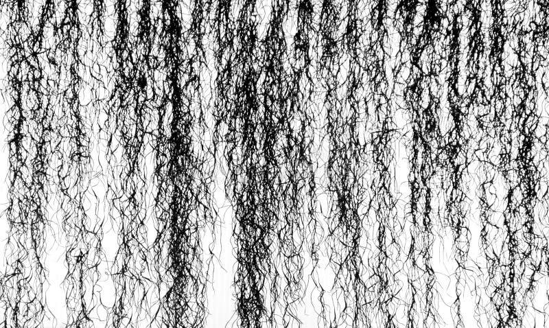 Raíces de la ejecución de los sicyoides de Cissus fotos de archivo libres de regalías