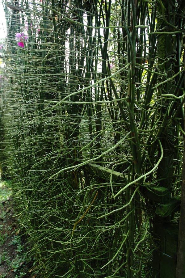 Raíces de las plantas de la orquídea fotos de archivo