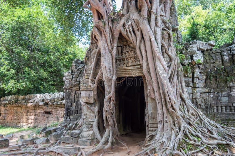 Raíces de un baniano en el templo de TA Prohm en Angkor, representante Camboya de Siem fotos de archivo