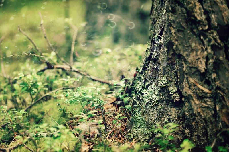 Raíces y corteza del árbol forestal Textura y fondo de madera abstractos con el espacio de la copia imagen de archivo libre de regalías