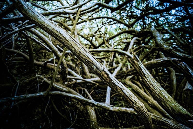 Raíces y ramas de árboles en bosque profundo imagen de archivo