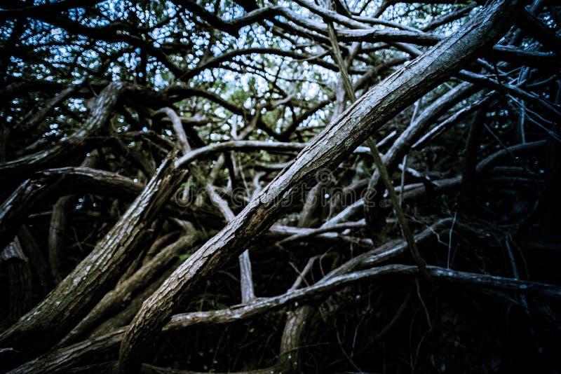 Raíces y ramas de árboles en bosque profundo imagen de archivo libre de regalías
