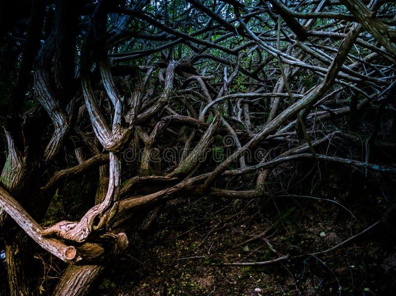 Raíces y ramas de árboles en bosque profundo imágenes de archivo libres de regalías