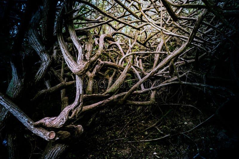 Raíces y ramas de árboles en bosque profundo fotografía de archivo