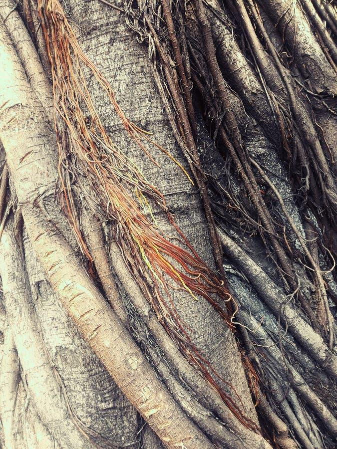 raíz imagenes de archivo