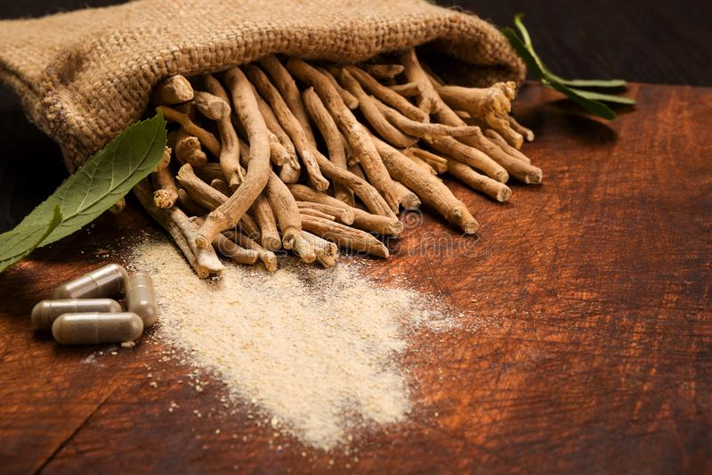 Raíz de Aswagandha, medicina herbaria foto de archivo libre de regalías