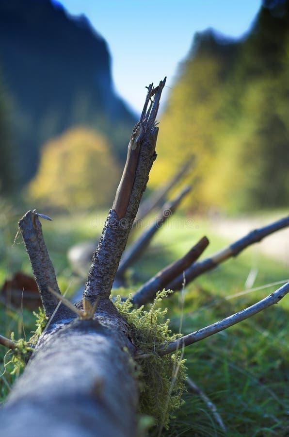 Raíz de madera en montañas imagen de archivo