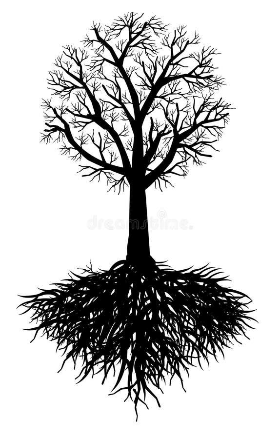 Raíz del árbol libre illustration