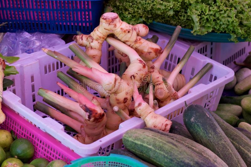 Raíz fresca del galangal para la venta en mercado en Phuket, Tailandia fotografía de archivo libre de regalías