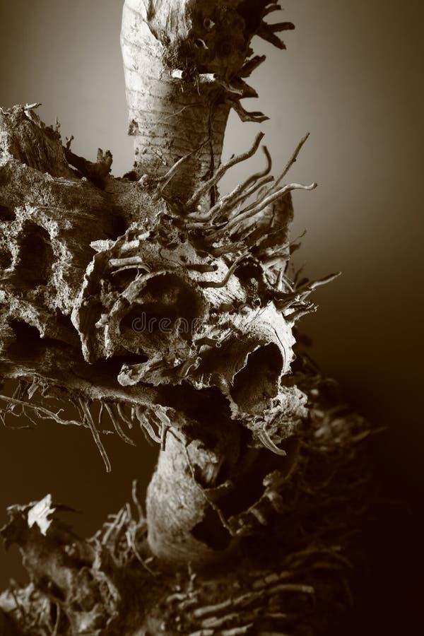 Raíz muerta del árbol fotografía de archivo